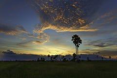 Φοίνικας και δραματικός ουρανός Στοκ Εικόνες