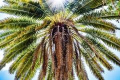 Φοίνικας καρύδων, ηλιόλουστη ημέρα στις Καραϊβικές Θάλασσες στοκ εικόνες με δικαίωμα ελεύθερης χρήσης