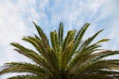 Φοίνικας καρύδων με τον ουρανό και τα σύννεφα Στοκ εικόνα με δικαίωμα ελεύθερης χρήσης