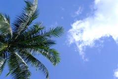Φοίνικας καρύδων με το μπλε ουρανό Στοκ φωτογραφία με δικαίωμα ελεύθερης χρήσης
