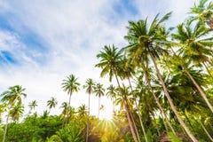 Φοίνικας καρύδων στην τροπική άποψη φύσης πρωινού παραλιών Koh Κ Στοκ Εικόνα