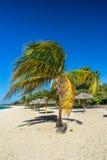 Φοίνικας καρύδων και ομπρέλες θαλάσσης, Τρινιδάδ, Κούβα Στοκ Φωτογραφία