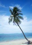 Φοίνικας καρύδων στην ηλιοφάνεια και την αμμώδη τροπικής θάλασσα α παραλιών και Στοκ Φωτογραφία