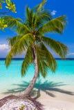 Φοίνικας καρύδων στην τροπική παραλία στις Μαλδίβες Στοκ Φωτογραφία
