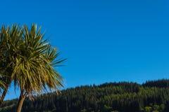 Φοίνικας λάχανων, μπλε ουρανός και ξύλα Lamlash, Arran, Σκωτία Στοκ Εικόνα