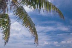 Φοίνικας με το μπλε ουρανό και άσπρο σύννεφο στο υπόβαθρο - αντίγραφο Στοκ Εικόνα
