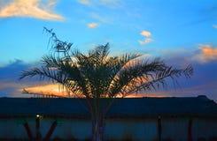 Φοίνικας με το υπόβαθρο ηλιοβασιλέματος, Ντουμπάι Ε.Α.Ε. Στοκ Εικόνες