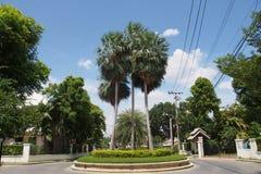 φοίνικας νησιών ημερομηνίας καναρινιών στοκ φωτογραφίες με δικαίωμα ελεύθερης χρήσης