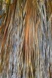 Φοίνικας ξηρός Στοκ εικόνα με δικαίωμα ελεύθερης χρήσης