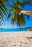 Φοίνικας πέρα από την όμορφη λιμνοθάλασσα στην παραλία Anse Λάτσιο στο νησί Praslin, Σεϋχέλλες, Στοκ φωτογραφία με δικαίωμα ελεύθερης χρήσης