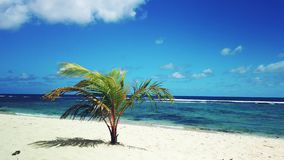Φοίνικας σε μια παραδείσια παραλία Κηλίδα ηλίου de Λα chapelle Grande-Terre, Γουαδελούπη, καραϊβική απόθεμα βίντεο