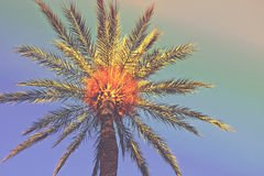 Φοίνικας σε μια παραλία Χαμηλή γωνία που πυροβολείται του treeline με το φύλλωμα στο ζωηρόχρωμο υπόβαθρο ουρανού Καθιερώνων τη μό Στοκ Φωτογραφία