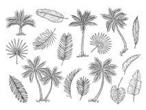 Φοίνικας σκίτσων Τροπικά δέντρα τροπικών δασών και εξωτικό διάνυσμα σύνολο σχεδίων χεριών φύλλων παλαμών εκλεκτής ποιότητας απομο διανυσματική απεικόνιση