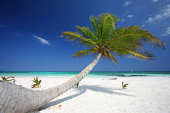 Φοίνικας στην παραλία Στοκ φωτογραφία με δικαίωμα ελεύθερης χρήσης