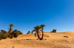Φοίνικας στην όαση ερήμων, Μαρόκο Στοκ φωτογραφίες με δικαίωμα ελεύθερης χρήσης