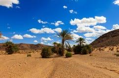 Φοίνικας στην όαση Μαρόκο ερήμων Στοκ φωτογραφίες με δικαίωμα ελεύθερης χρήσης