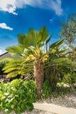 Φοίνικας στον αγγλικό κήπο στοκ εικόνες