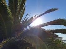 Φοίνικας στους ηλιόλουστους μπλε ουρανούς στοκ εικόνα με δικαίωμα ελεύθερης χρήσης