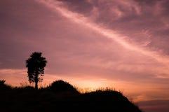 Φοίνικας στο ακρωτήριο Phrom Thep Στοκ φωτογραφία με δικαίωμα ελεύθερης χρήσης