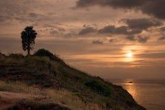 Φοίνικας στο ακρωτήριο Phrom Thep Στοκ Εικόνες