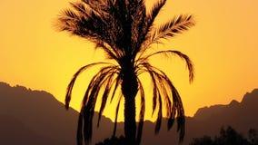 Φοίνικας στο ηλιοβασίλεμα Σκιαγραφία του εξωτικού φοίνικα σε ένα υπόβαθρο του ήλιου και των βουνών απόθεμα βίντεο
