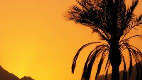 Φοίνικας στο ηλιοβασίλεμα Σκιαγραφία του εξωτικού φοίνικα σε ένα υπόβαθρο του ήλιου και των βουνών φιλμ μικρού μήκους