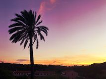 Φοίνικας στο ηλιοβασίλεμα στοκ εικόνα