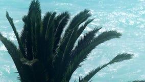 Φοίνικας στο μπλε υπόβαθρο θάλασσας, τροπικές θερινές διακοπές, εξωτικό ταξίδι νησιών φιλμ μικρού μήκους