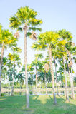 Φοίνικας στο πάρκο, δημοφιλείς διακοσμητικές εγκαταστάσεις στον κήπο Στοκ Φωτογραφίες