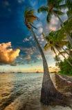 Φοίνικας στο χρόνο ηλιοβασιλέματος Στοκ Εικόνα