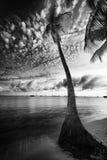 Φοίνικας στο χρόνο ηλιοβασιλέματος Στοκ Εικόνες