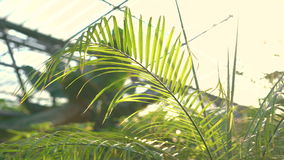 Φοίνικας στο gardenhouse 4K απόθεμα βίντεο