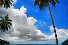 Φοίνικας, σύννεφα και μπλε ουρανός 2 Στοκ εικόνα με δικαίωμα ελεύθερης χρήσης