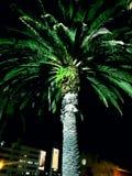Φοίνικας τη νύχτα Στοκ Εικόνα
