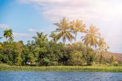 Φοίνικας τοπίων και μικρή λίμνη στην Ταϊλάνδη Στοκ εικόνες με δικαίωμα ελεύθερης χρήσης