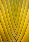 φοίνικας Στοκ φωτογραφίες με δικαίωμα ελεύθερης χρήσης