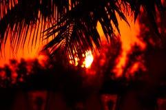 Φοίνικας frawns με το ηλιοβασίλεμα Στοκ Εικόνες
