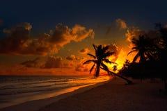 Φοίνικας Riviera Maya ηλιοβασιλέματος παραλιών Tulum Στοκ φωτογραφίες με δικαίωμα ελεύθερης χρήσης