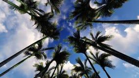 Φοίνικες αλεών στον ουρανό σύννεφων απόθεμα βίντεο
