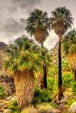 Φοίνικες ανεμιστήρων στο δέντρο του Joshua Στοκ φωτογραφία με δικαίωμα ελεύθερης χρήσης
