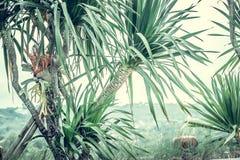 Φοίνικες, εκλεκτής ποιότητας πράσινος τονισμένος και τυποποιημένος, δέντρο καρύδων, θερινό δέντρο, αναδρομικό Στοκ Εικόνες