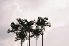 Φοίνικες ενάντια στον ουρανό Στοκ φωτογραφία με δικαίωμα ελεύθερης χρήσης