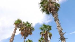 Φοίνικες ενάντια στο μπλε ουρανό στην παραλία Barceloneta, Βαρκελώνη απόθεμα βίντεο
