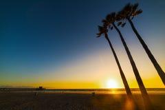 Φοίνικες θαλασσίως στο Newport Beach στο ηλιοβασίλεμα Στοκ φωτογραφίες με δικαίωμα ελεύθερης χρήσης