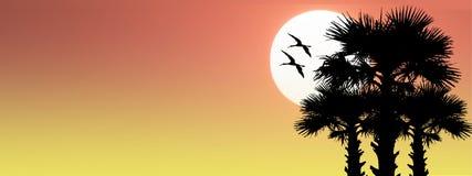 Φοίνικες θερινών εξωτικοί τροπικοί σκιαγραφιών με δύο πουλιά στο s Στοκ Εικόνες