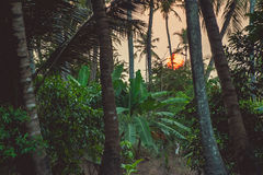 Φοίνικες και δέντρα μπανανών στο υπόβαθρο ηλιοβασιλέματος Στοκ φωτογραφία με δικαίωμα ελεύθερης χρήσης