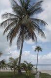 Φοίνικες και αποβάθρα 2 των Florida Keys Στοκ φωτογραφία με δικαίωμα ελεύθερης χρήσης