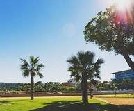 Φοίνικες και λεπτομέρεια ενός μεσογειακού κήπου πόλεων στο Αντίμπες Στοκ εικόνες με δικαίωμα ελεύθερης χρήσης