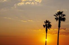 Φοίνικες και ζωηρόχρωμος ουρανός με το όμορφο ηλιοβασίλεμα στοκ φωτογραφίες