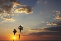 Φοίνικες και ζωηρόχρωμος ουρανός με το όμορφο ηλιοβασίλεμα στοκ εικόνα με δικαίωμα ελεύθερης χρήσης